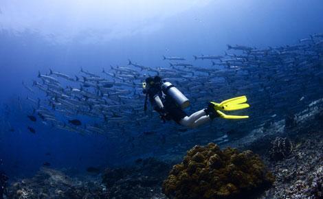 """全线大堡礁""""之全方位海陆空 ——澳新凯墨12日lx"""