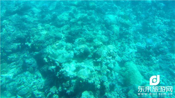 潜艇看水下世界